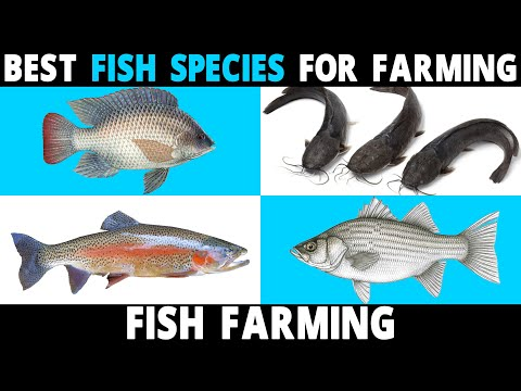 Best FISH SPECIES To Farm | Tilapia, Catfish, Perch, Carp, Hybrid Striped Bass, Trout, Salmon Fish
