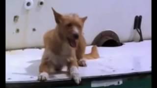 Дружба собаки и дельфина.Смотреть всем
