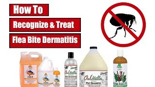 How To Recognize & Treat Flea Bite Dermatitis