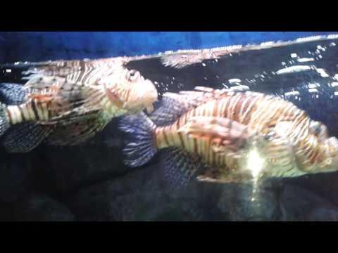Aquarium Istanbul Forum Part 2