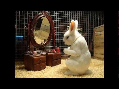 conejo reproductor - YouTube