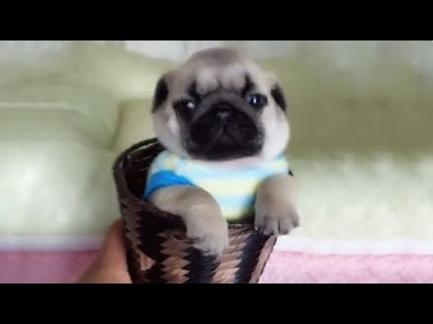 Cute is Not Enough - Funny Cats and Dogs Compilation #82