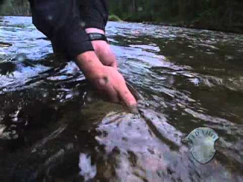 Fishing For Westslope Cutthroat On The St. Joe
