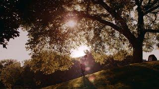 Sondre Lerche - BAD LAW (Official video)