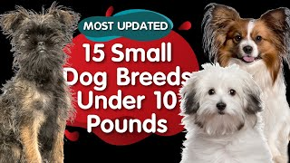 Top 15 Small Dog Breeds Under 10 Pounds (MOST UPDATED)