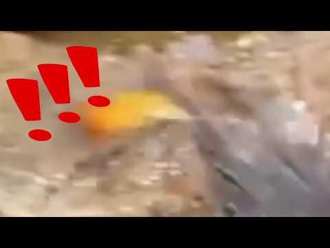 Octopus Meme