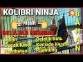 Kolibri Ninja Gacor Belajar Nembak Konin Bahan  Mp3 - Mp4 Download