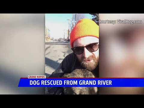 image for Man Saves Dog Trapped In Freezing River And Wants To Adopt Him