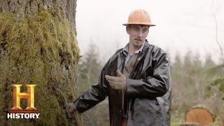 america promised land scandinavian loggers in oregon bonus history