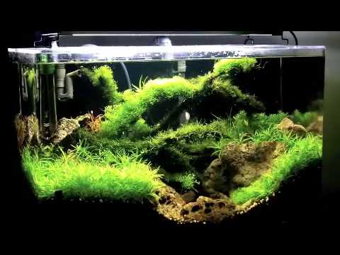 Planted fish tank aquarium massive plant growth over six for Planted tank fish