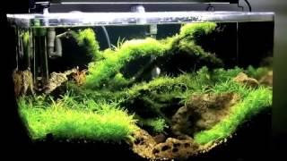 planted fish tank aquarium massive plant growth over six weeks with high lighting and diy co2