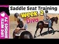 Restarting an Arabian Mare for Saddle Seat- Diva Week 2