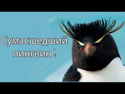 Все игры пингвины из мадагаскара 3