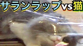 一時期YouTube界で流行ったサランラップドッキリを人間じゃなく、猫に仕...