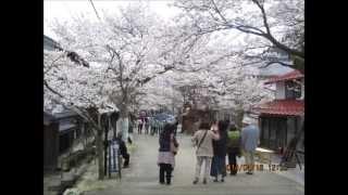 20140416 新庄村の凱旋桜三分咲き