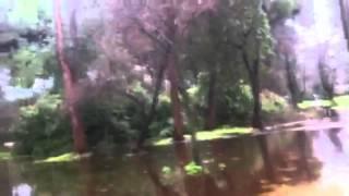 La pineta di Viareggio o quel che rimane....