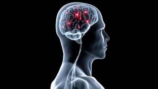 Анатомия. Высшая нервная деятельность
