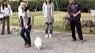 マンションで飼われているペットの犬の「しつけ教室」を開催しました。
