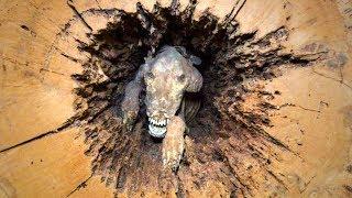 60 Jahre alter Hund in einem Baumstamm entdeckt!