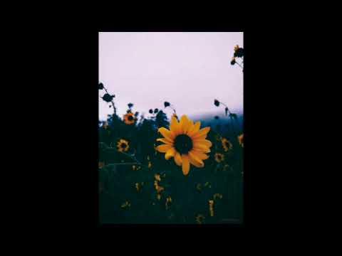 Harry Styles- Sunflower Vol. 6 (1 Hour Loop)