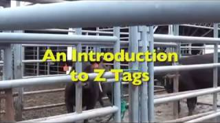 Introduction to Z Tags ear tags