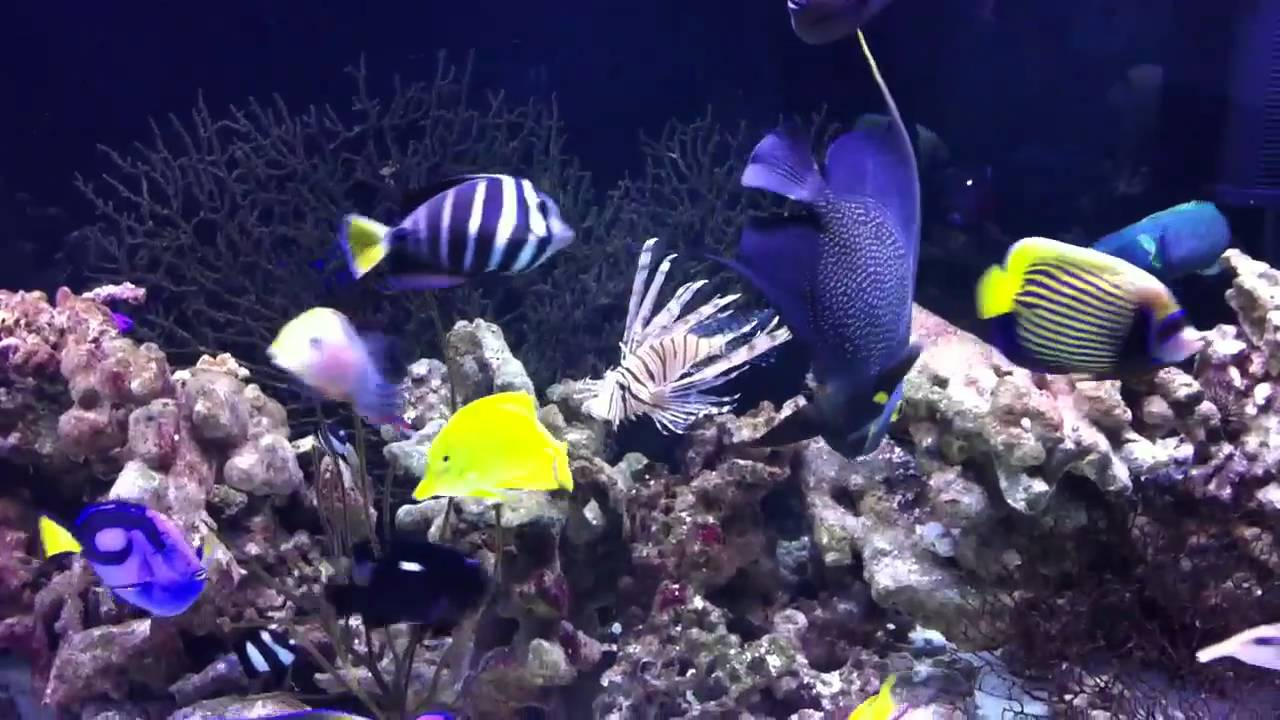 Big Saltwater Fish   YouTube