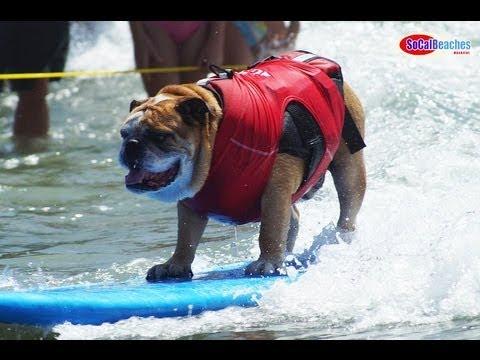 2013 Helen Woodward Surf Dog Surf a Thon Highlights