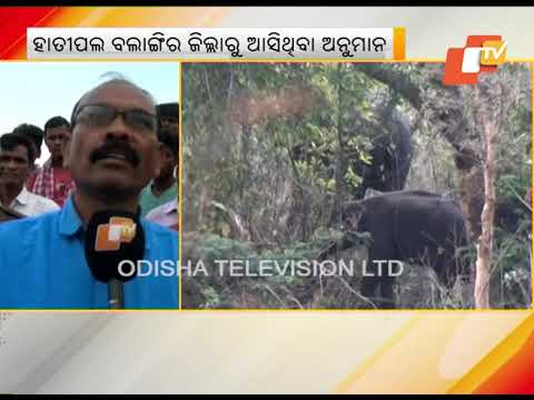 Elephant Herd Strays Into Nuapada Villages
