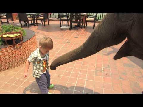 Feeding elephants is a full time job...