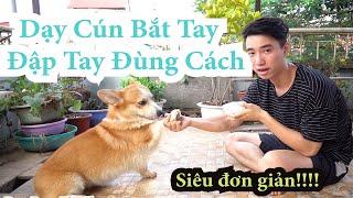 Huấn luyện chó cơ bản | Dạy cún BẮT TAY, ĐẬP TĄY tнeo lệnh