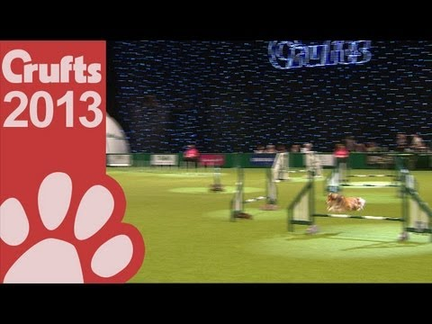 Agility - Crufts Team - Small Final - Crufts 2013