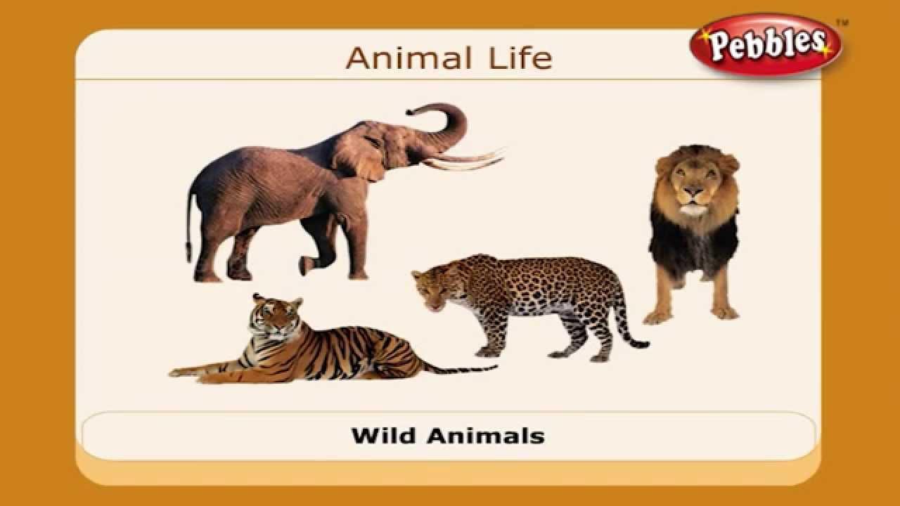 UT Animal Science