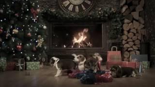 Песня про собак новый год❤