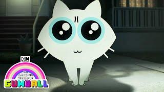 Here Kitty | Gumball | Cartoon Network