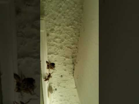 Chearter Landing Apartments Jacksonville, Florida  Bee infested don't move in