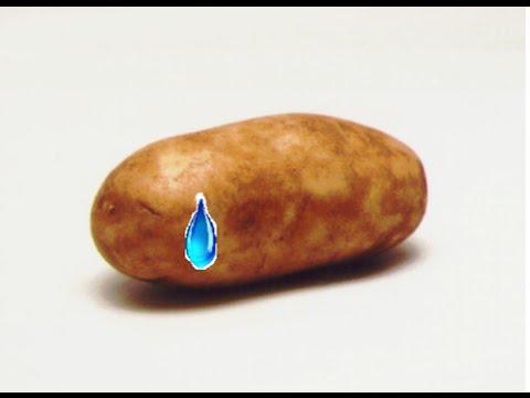 The Sad Potato Song