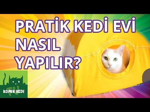 How to Make an Easy Cat House? | Funny Cat