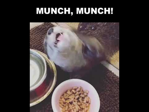 This Otter Eating is #Life 😍😍 #Pets, #Funny,#animals, #petlovers, #wildlife, #Dogs, #Cats