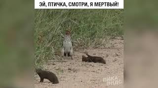 Эти удивительные животные. Смех до слез. Веселая подборка.