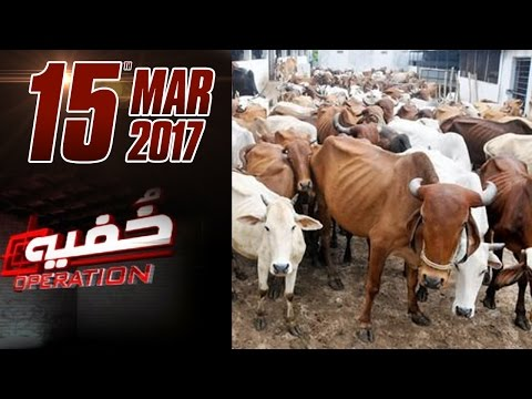 Illegal Slaughterhouse | Khufia Operation | Samaa TV | 15 March 2017