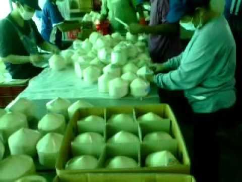 Packing young coconut for export การบรรจุมะพร้าวอ่อนส่งออก