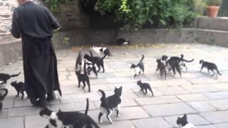 Ватопедские кошки(Так кормят кошек в монастыре Ватопед на Афоне Смотрите другие видео с Афона на сайте www.blagosloven.ru., 2012-11-05T09:57:46.000Z)
