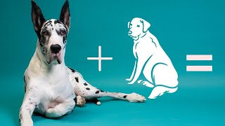 10 Incredible mixed cross hybrid breeds of Great Dane