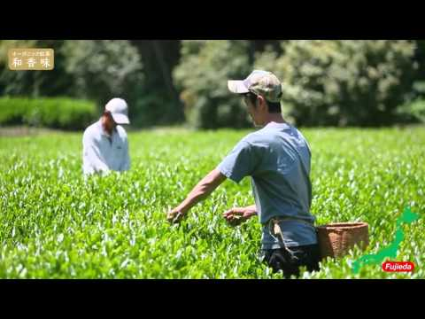 "Japanese Organic Tea ""wakomi"""
