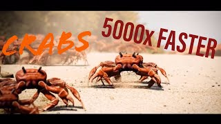 Crab Rave 2x, 4x, 8x, Up To 5000x FASTER