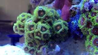 Морской нано аквариум 20 литров Aquades # 2 часть   5 gallon Pico reef aquarium Aquades #2 part(Морской нано аквариум 20 литров Aquades # 2 часть   5 gallon Pico reef aquarium Aquades #2 part Заказать изготовление и обслуживание..., 2012-06-30T13:24:59.000Z)