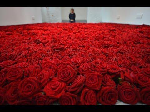 Егор Крид vs Dj Tarantino \u0026 Dj Dyxanin – Миллион алых роз ( KeGo Mash Up)