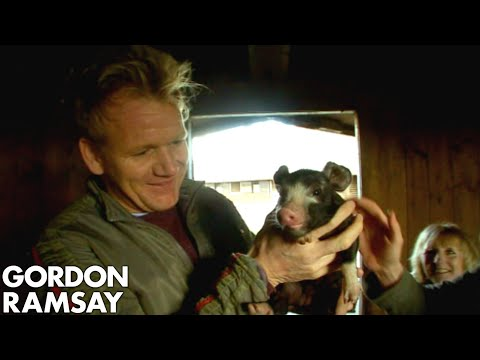 Gordon Ramsay Learns How To Raise Pigs For The F Word | The F Word Full Episode