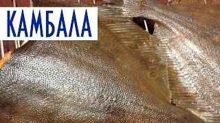 Копчение рыбы в домашних условиях. Камбала