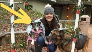 Nurse Comes Up With A Genius Solution For Old Abandoned Dogs That's Spreading Like Wildfire